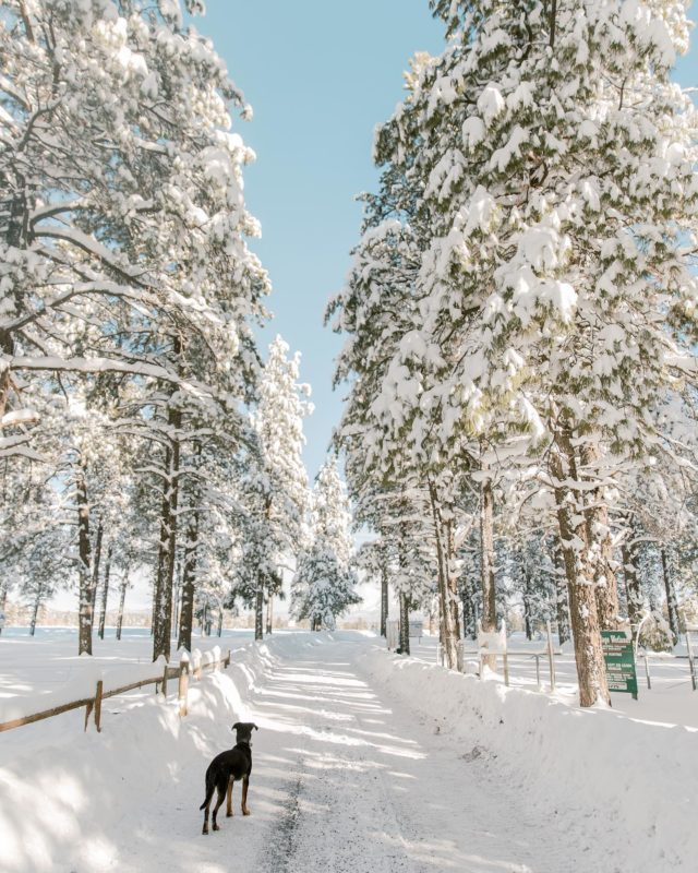 I like it when it snows in Flagstaff. Despite the past 6 winters being in Hawaii the month of Jan / Feb... this winter hasn't been all that bad. It's been wayyyy more fun with a puppy and a boyfriend 😂 #flagstaff